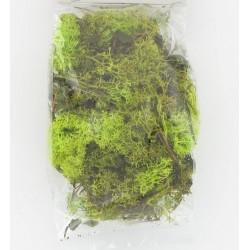 Mousse islande 40grs vert clair
